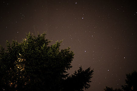 green trees under stary night