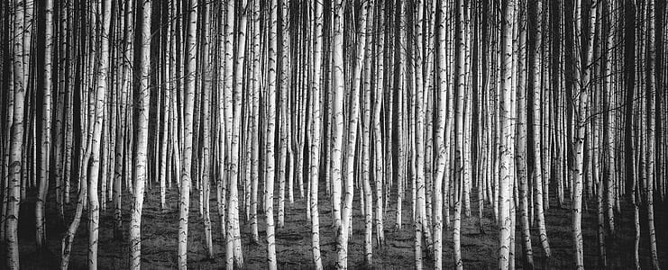 grayscale photo of tree logs