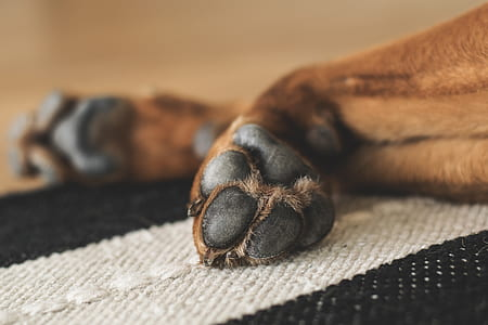 close shot of animal paw