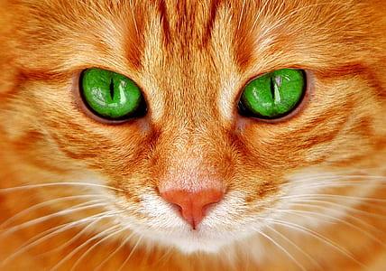orange tabby cat in closeup photo