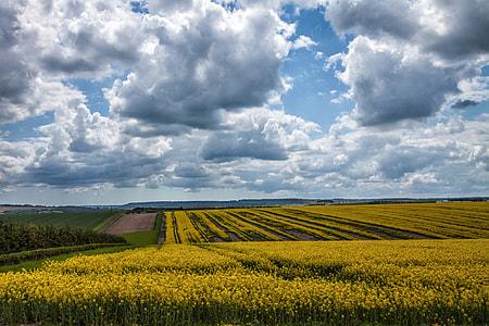 Landscape shot of a yellow field in Devon, England