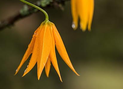 close up shot of orange flowers in green stem