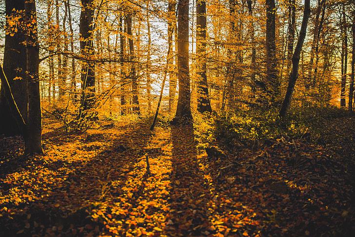 Shadow Autumn Forest