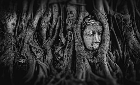optical illusion of gray tree with face