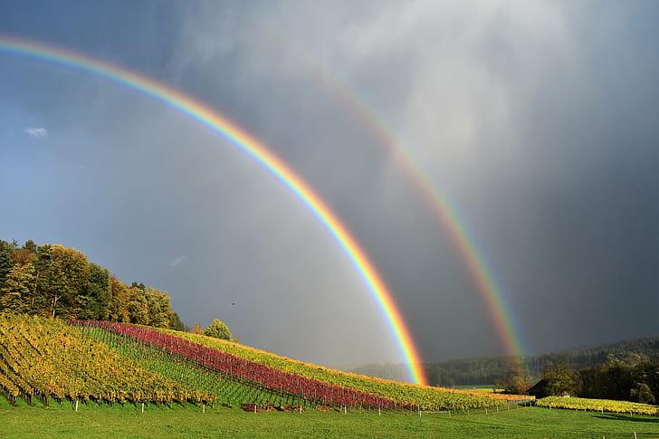 rainbow under flower field