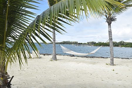 photo of white hammock mounted on coconut trees