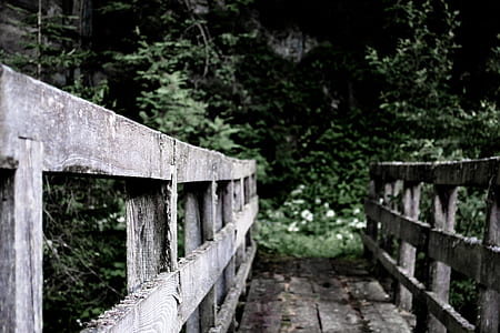 gray wooden bridge near green leafed tree
