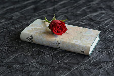 brown hardbind book with red rose on top