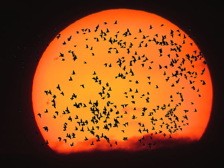 silhouette photo of flying birds during golden h our