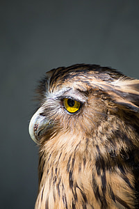 close photo of brown and black owl