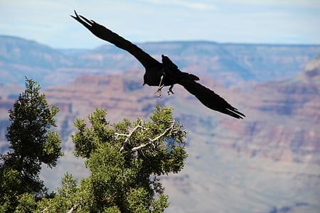 black eagle flying over green leaves tree