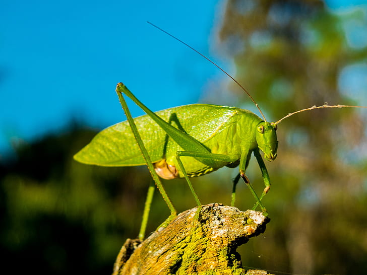 green katydid in selective focus photography