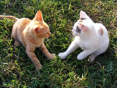 closeup photo of two orange and white kittens