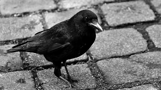 black crow on gray concrete road