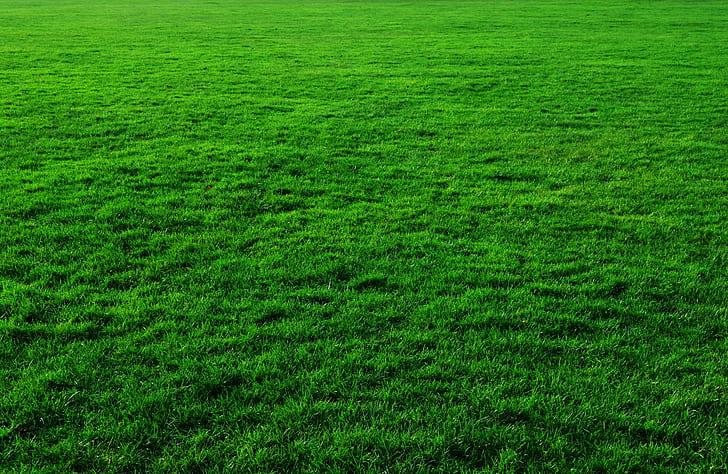 Royalty-Free Photo: Green Grass Field