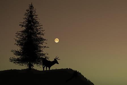 silhouette of buck deer near pine tree