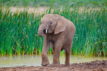 close up photo of brown elephant