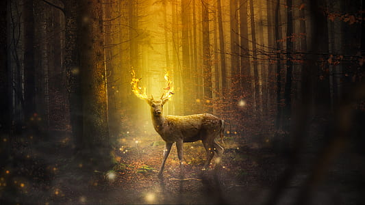 photo of deer buck under sunray