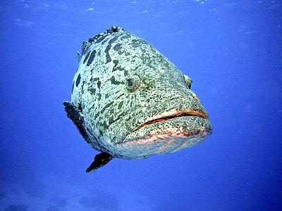 white and grey stone fish