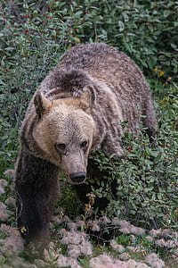 brown grizzly bear during daytime