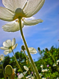 worm's eye view of white petaled flower