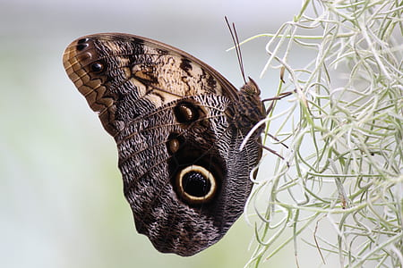 brown and black peacock butterfly in closeup photography