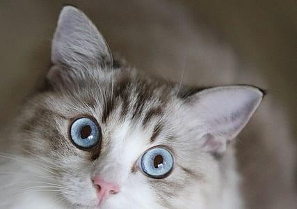 shallow focus photo of brown tabby kitten