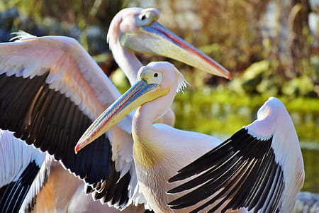 two pelicans near green leaf trees