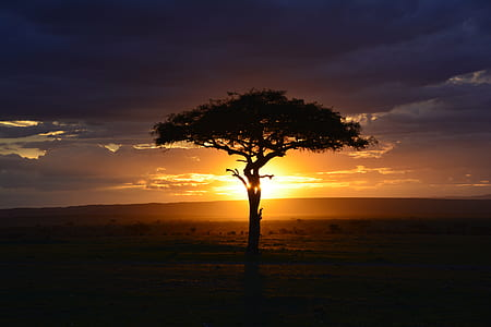 silhouette photo of tree during sunrise
