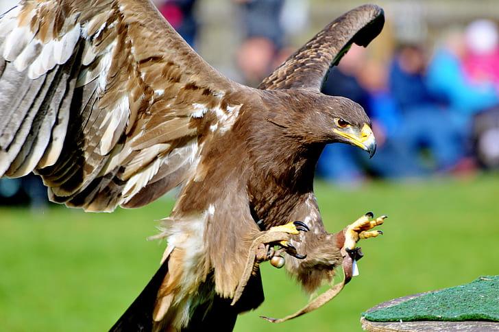 tilt shift lens photography of brown eagle during daytime