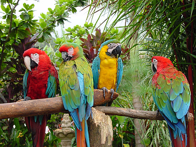 four multicolored parrots perched on brown wooden branch at daytime