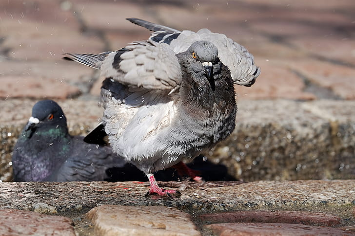 two gray doves on pavement