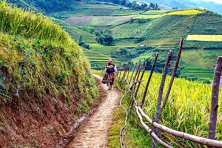 person walking near a rice terraces