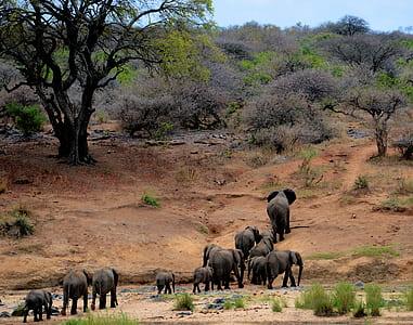Elephants on Brown Mountain