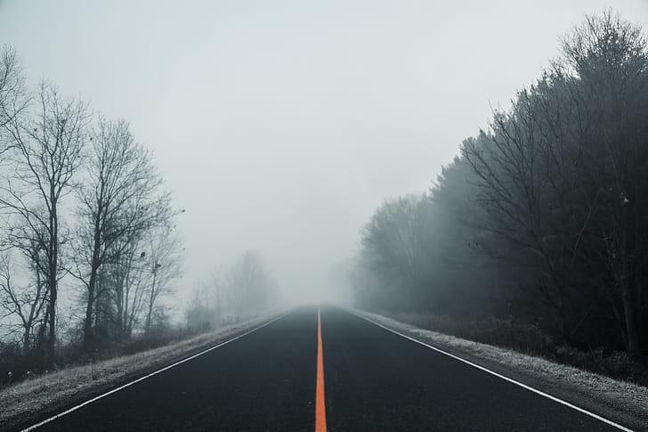 foggy empty road between trees