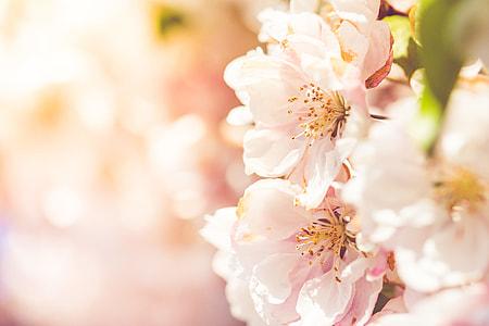 Wonderful Spring Blooms