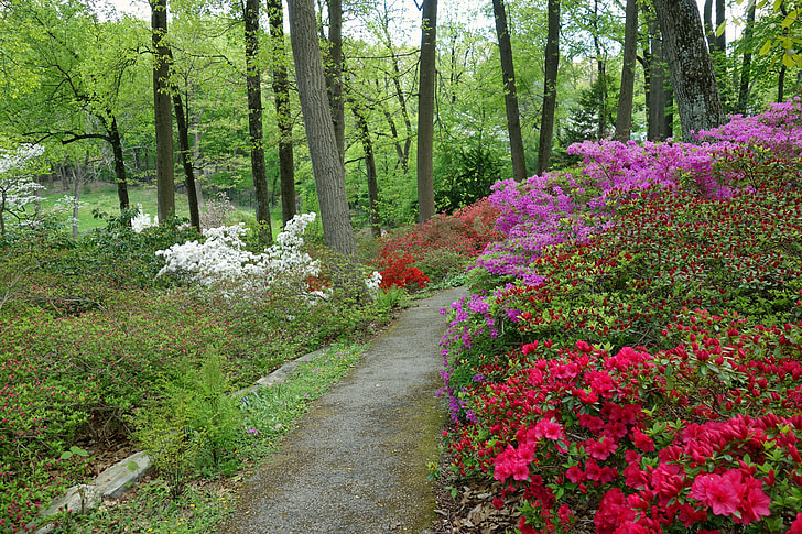 photo of white, purple, and red flowers on forest trees