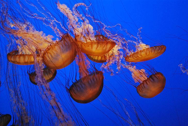 focus photo school of jellyfish