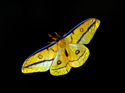 yellow and purple moth