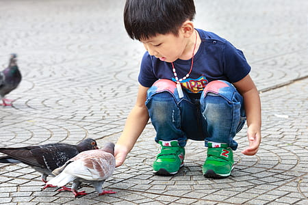 boy feeding two pigeons