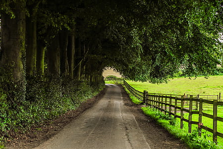 concrete road below green trees beside brown wooden fence