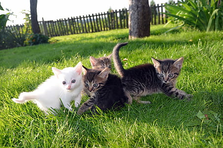 four gray and white kittens on green grass during daytime