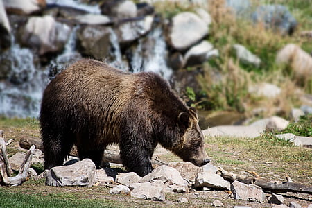 bear standing on rocky road