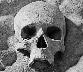 gray skull on top of rock