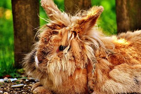 brown rabbit on ground