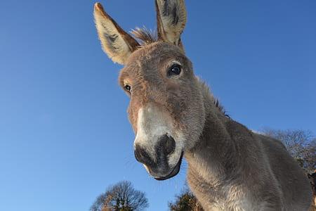 brown donkey face closeup photo