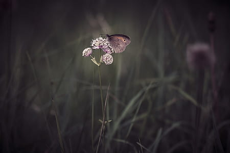 gray butterfly on purple flower in grayscale photo