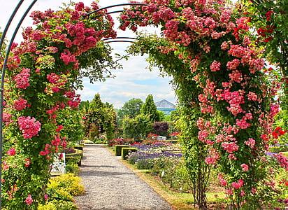 pink flowers arc gate closeup photo