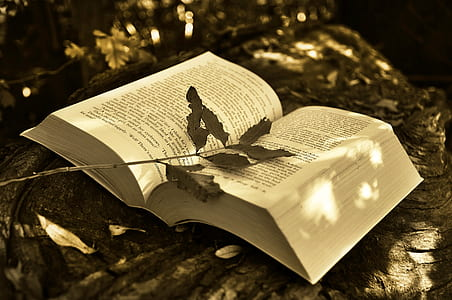 book on brown tree trunk