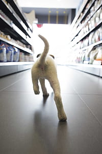 short-coated white puppy walking on grocery store